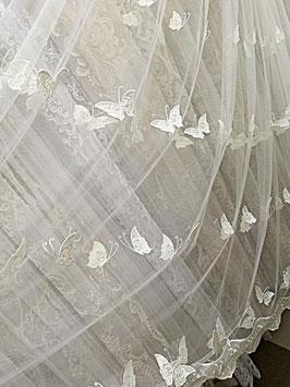 Бабочки морячки.