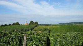 Hopfengarten St. Anton (Bild 6)