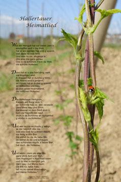 Hallertauer Heimatlied (Frühling)