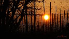 """Sonnenaufgang B1"""""""