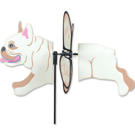 Windspiel Bully Bulldogge
