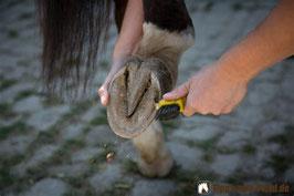 HufNeugier für Pferdemenschen
