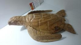 Wasserschildkröte gross