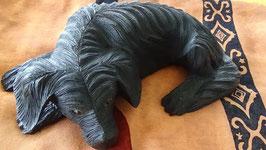 Hund liegend schwarz