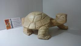Landschildkröte gross
