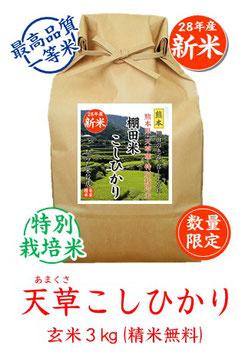 天草こしひかり 玄米3kg