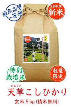 天草こしひかり 玄米5kg