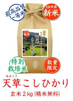 天草こしひかり 玄米2kg