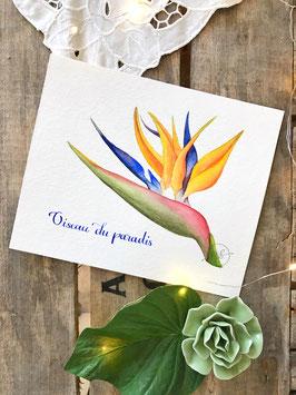 "Aquarelle originale ""Oiseau du Paradis"""