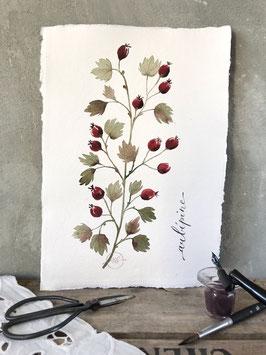 """Aquarelle florale """"Aubépine"""""""