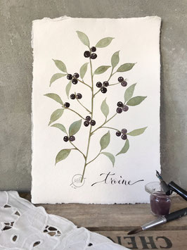 """Aquarelle florale """"Troène"""""""