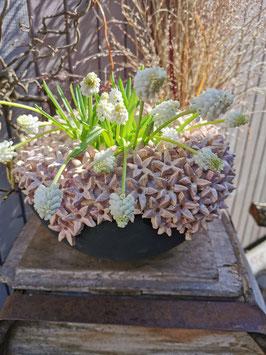 Blütenvase flieder 27cm Durchmesser