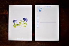 オリジナルポストカード 紫陽花