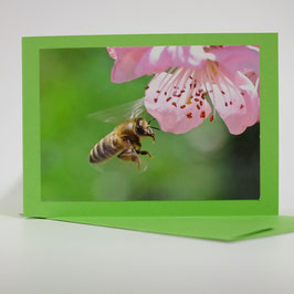 Biene auf pistache grüner karte