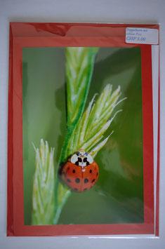 Geburtstags karte mit glücks-chäferli rot