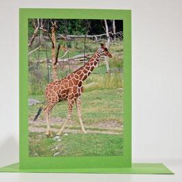 Giraffe  auf pistache grüner karte