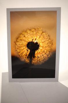Pusteblume4 Sonnenuntergang Karte Grau