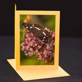 Landkärtchen Schmetterling auf gelber karte