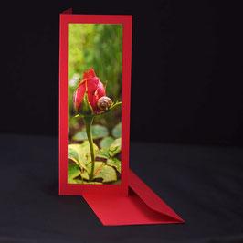 Elegance Ultra red Rose mit schnecke