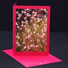 mini Lilien  auf Kosmos pink karte