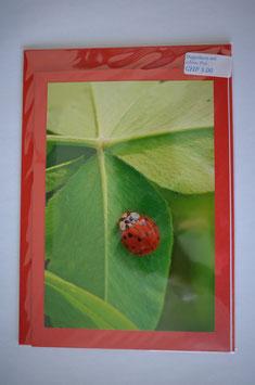 Geburtstags karte glücks-chäferli auf Klee Blatt rot