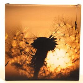 Pusteblume 1 ausschnitt/  20cm x 20 cm
