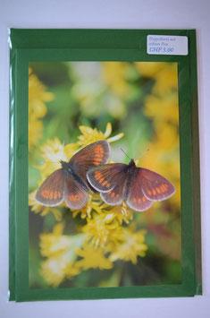 Schmetterling duo Grün