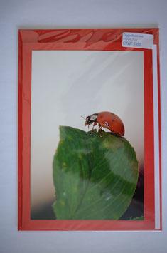 Geburtstags karte glücks-chäferli auf Blatt rot