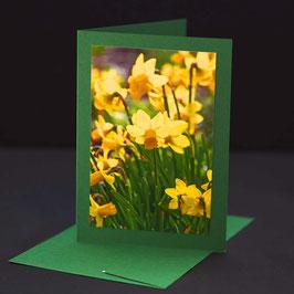Osterglocke auf Brillantgrüner karte