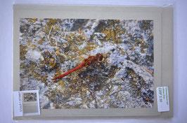 libelle / Glimmer Silber Karte