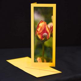 Elegance Narzissengelb Rot/Gelbe Rose mit schnecke
