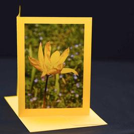 weinberg tulpe  auf gelber karte
