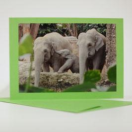 Elefanten Familie auf pistache grüner karte