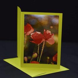 C6 Mohnblumen duo auf lime Tonic grüner karte
