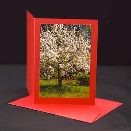 Frühlingsbaum auf Roter Karte C6