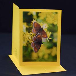 Schmetterlings duo auf gelber karte