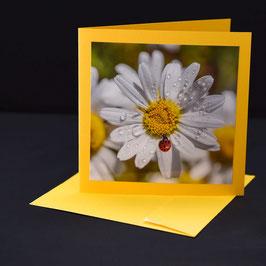 carre 15 Margerite mit glückschäfferli auf gelber karte