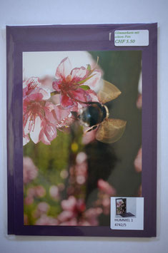 Hummel 1 / Glimmer purple Karte