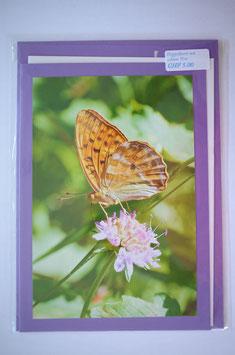 Schmetterling Lila Karte