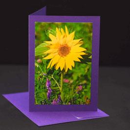 C6 kleine Sonnenblume auf  Amethyst violetter karte
