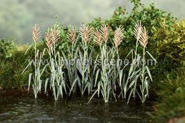 Model-Scene - Schilf 1:45, 10 Pflanzen auf Messingblech (VG4-125)