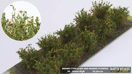 Welberg - SAO 10 Büsche mit orangen Blüten, Höhe 2-3 cm