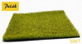 Polak - 0   Rapsfeld, Höhe 1,5-2cm (5861)