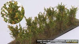 Welberg - Büsche mit orangen Blüten, 3-4 cm (SCO)