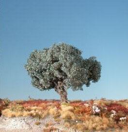 Silhouette - Olivenbaum, Sommer, 245-12, 1:87 / H0