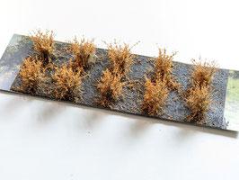 Welberg - 10 Büsche Rohleder Braun, Höhe 2-3 cm (SARB)