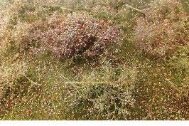 Silhouette - Waldlichtung Spätherbst, 25x15,5cm (742-24S)