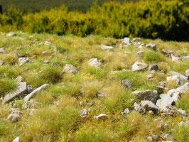 Model-Scene - Steiniges Brachland mit vielen Kalksteinen - Spätsommer (F733) (H0)