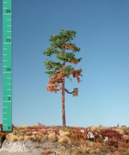Silhouette - Wetterkiefer, in 4 Größen (270-xx) (H0)