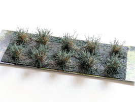 Welberg - 10 Büsche Salbei grün, Höhe 2-3 cm (SAS)